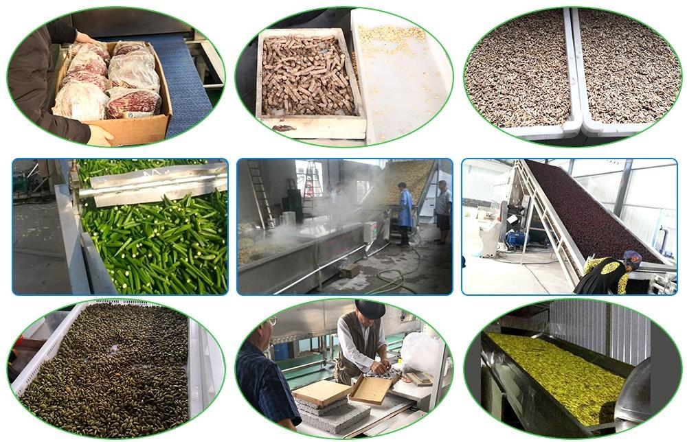 usine de séchage de fruits industriels